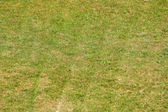 Green grass freshly mown background — Stock Photo