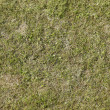 Green grass texture or background of golf course and football soccer field — Stock Photo