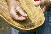 Gold Panning in the River with Old Wooden Pan — Stock Photo