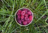 Cup Fresh Raspberries — Stock Photo