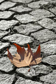 Leaft on the ground — Stockfoto