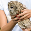 Tawny owl — Stock Photo #31926593