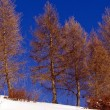 Winter mountain scenery landscape italy snow — Stock Photo #38339793