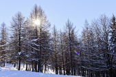 Winter mountain scenery landscape italy snow — Stock Photo
