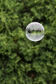Soap bubble outdoor — Stock Photo