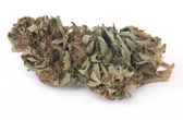 Marijuana bud — Stock Photo