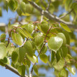Stock Photo: Spring tree foliage