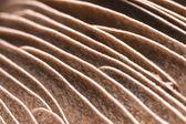 Mushroom Gills — Stock Photo