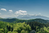 Carpathian Mountains Scenery — Foto Stock