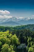 Carpathian Mountains Scenery — Stock Photo
