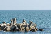 Cormorant Birds At The Black Sea — Stock Photo