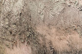 Dirty Pig Skin Texture — Stock Photo