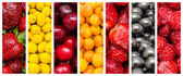 Fresh Summer Fruits Collage — Stock Photo