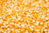 Corn Seeds Background — Stock Photo