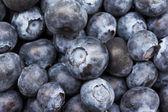 Fresh Bilberries — Stock Photo