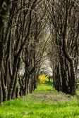 Forrest Alley — Foto de Stock