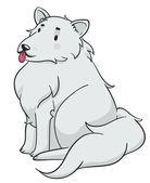 Fluffy Dog — Stock Photo