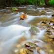 Forest creek - Stock Photo