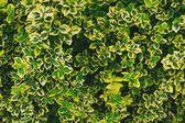 Foglie di sfondo per il desktop - verde e giallo — Foto Stock