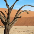 Stock Photo: Sossusvlei