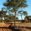 Track in the Kalahari — Stock Photo