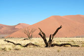 Death tree in the desert — Stock Photo