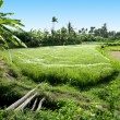 Terrace rice fields, Bali, Indonesi — Stock Photo
