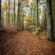 Stock Photo: Pathway through the autumn forest