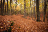 Path in autumn forest . nature background — Stock Photo