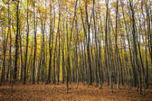 Autumn forest trees. nature background — Stock Photo