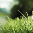Single blades of grass in front of a blurred background - Stock Photo