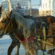Horse team in winter town — Stock Photo
