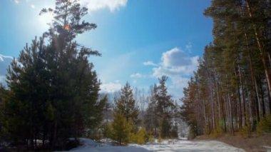 Himmel über winterwald. zeitraffer — Stockvideo