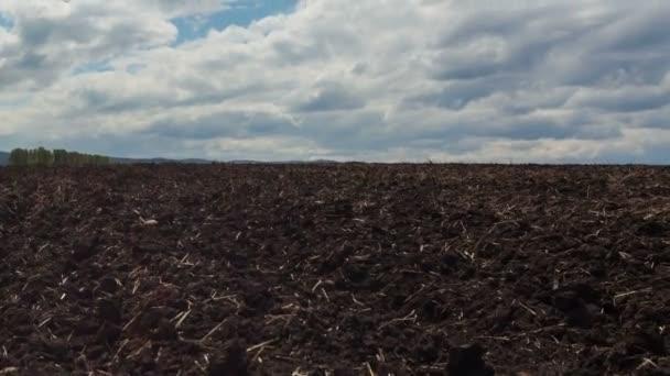 A través del campo para el cielo — Vídeo de stock