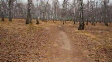 森を散歩します。 — ストックビデオ