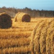 Stock Photo: Hay bales on the field