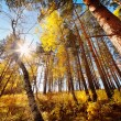 Beautiful autumn forest — Stock Photo #23722221