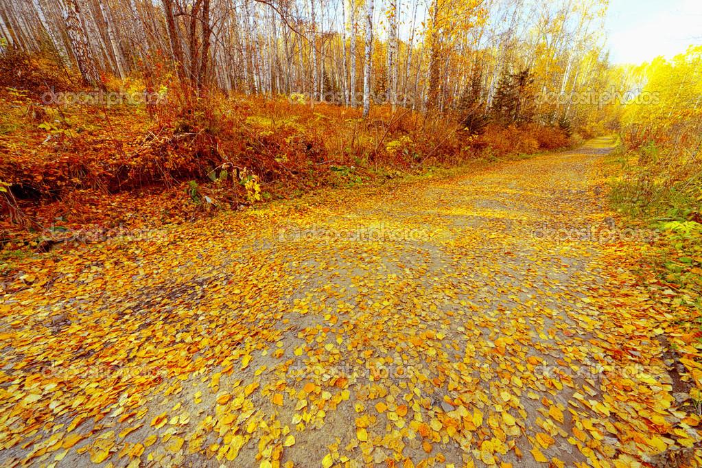 秋天树叶树林风景_儿童树林风景