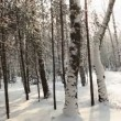Stock Video: Winter forest