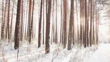 Winter forest — Stock Video