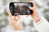 Photo Winter Forest — Stock Photo