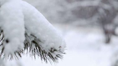 Sněhová vánice — Stock video