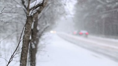 Snow Blizzard — Stock Video