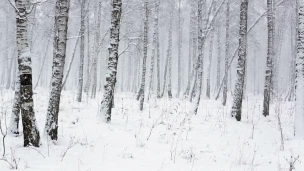 Cae nieve en invierno — Vídeo de stock
