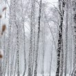 Stock Video: Snowstorm in Dense Forest