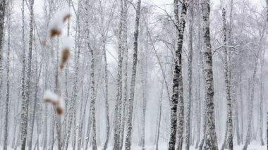 Sněhová bouře v hustém lese — Stock video