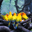 Guangzhou zoo Birds — Stock Photo #21066701