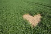 En forma de corazón en campo verde — Foto de Stock