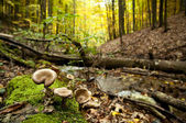 Group of mushrooms in the autumn forest  — Stok fotoğraf