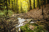 Mountain creek in the autumn beech forest. (Hungary)  — Stock Photo